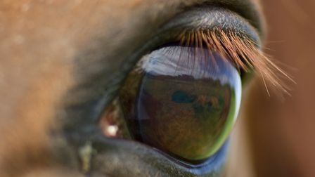 Research for jump racing has found horses and humans see colour completely differently. Picture: Ge