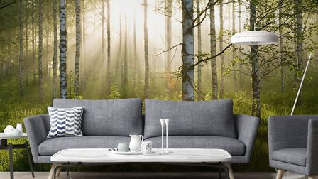 Walk On The Wild Side Wallsauce Birch Forest Sunlight Wallmural, from �30 per square metre. Picture