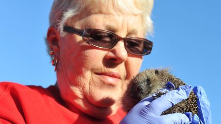 Ann Rushbrook with one of the hedgehogs. Picture: SARAH LUCY BROWN