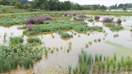 Anglian Water's wetland treatment works at Ingoldisthorpe in North Norfolk Pic: Matthew Power Phot