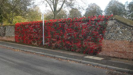 The poppy display at St Mary's Church in Walsham-le-Willows Picture: JANE BROWN