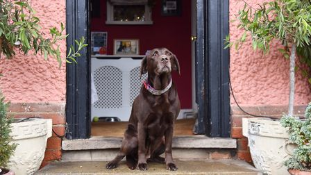 Pub dog Missy at The Dog in Grundisburgh. Picture: SONYA DUNCAN