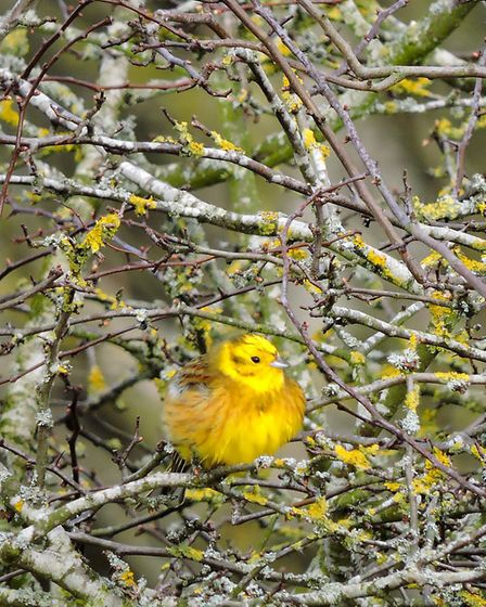 Winner in the 12 to 18 years category: Yellowhammer by Andrew Mitchell