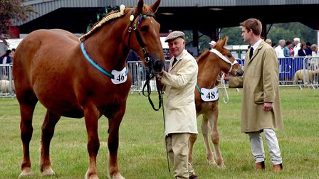 Suffolk Horses at the 2018 Suffolk Show Picture: ANDY ABBOTT