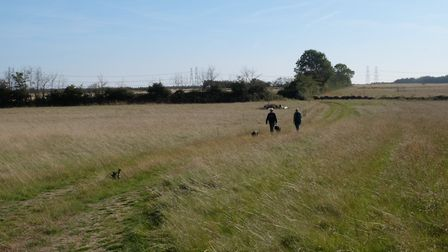 The AONB site at Broom Covert Picture: BRIDGET CHADWICK