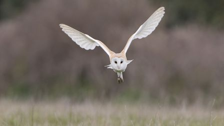 An owl in flight at the AONB Picture: PAUL SAWYER