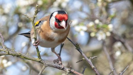 A goldfinch at the AONB Picture: CONTRIBUTED