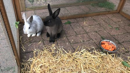 Remaining rabbits will go to an experienced local smallholder Picture: SUFFOLK TRADING STANDARDS
