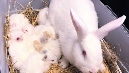 A white doe and her young, called called Snow White and the seven dwarves, have moved to the RSPCA S