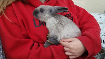 Two American sable rabbits have moved to the West Suffolk branch of the RSPCA to be neutered and mad