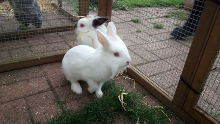 Matthew Lowe's partner signed over 25 rabbits to Suffolk Trading Standards Picture: SUFFOLK TRADING