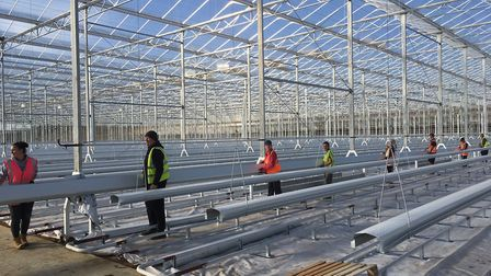 Workers putting equipment into place at Sterling Suffolk's glasshouses at Great Blakenham Picture: