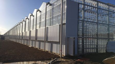 Sterling Suffolk's glasshouses at Great Blakenham Picture: SARAH CHAMBERS