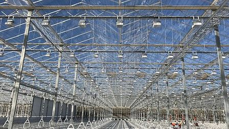 The glasshouses taking shape Sterling Suffolk site at Blakenham Picture: RICHARD LEWIS