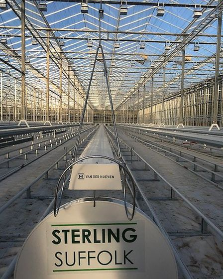 The glasshouses at the Sterling Suffolk site at Blakenham Picture: RICHARD LEWIS