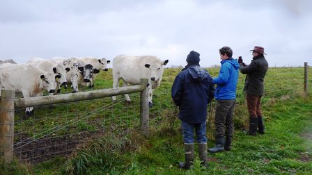 Funding from Adnams helped to purchase three British white cattle for conservation grazing