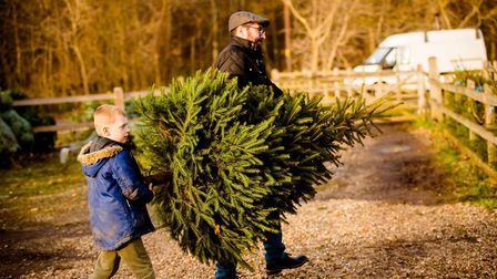 Pick your own real Christmas tree Picture: TOM SOPER
