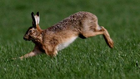 Drones are being used to search for suspected hare coursers in Felixstowe Picture: WILDROB47