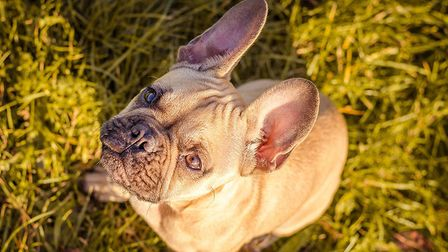 Which dog breed is your favourite? Picture:THE KENNEL CLUB