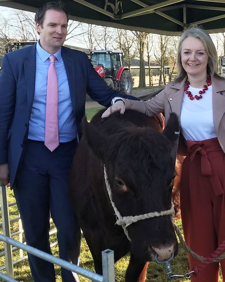 Dr Dan Poulter and Liz Truss with one of the cattle at Otley College. Picture: Office of DR DAN POUL