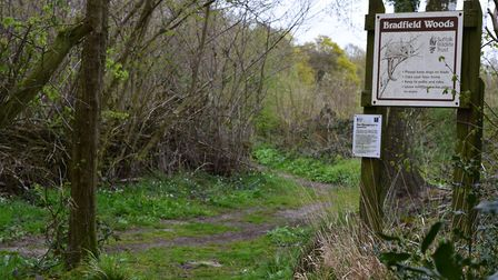 A film crew from Countryfile has visited Bradfield Woods Picture: Andrew Mutimer