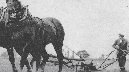 A picture of Jack Page at work with his horses Picture: Contributed
