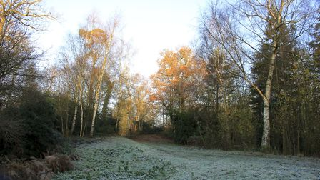 Frosty mornring walk in Shrubland park. Picture: BARRY PULLEN