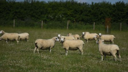 Sheep farmers are warning of dire effects on their businesses if the UK crashes out of Europe with n