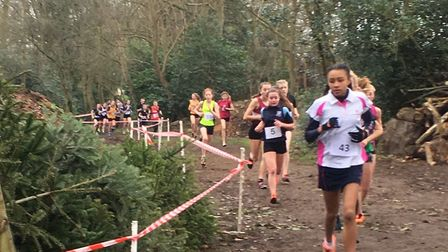 Action from the junior girls' race, as runners make their way through a wooded section at Woodbridge