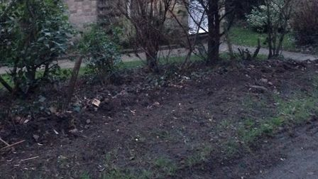 The gap where there should be a hedge in Church Road, Tostock Picture: MARIAM GHAEMI