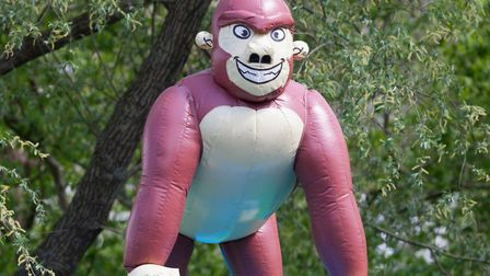 An inflatable gorilla like the one stolen - no-one noticed because it had a tendency to deflate Pict