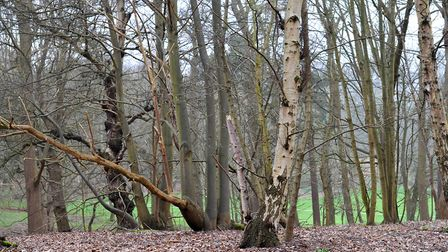 Demand for woodland in Suffolk is outstripping supply Picture: SARAH LUCY BROWN