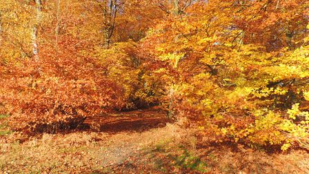 Those who buy woodland tend to see themselves as custodians rather than owners Picture: Margaret Hol