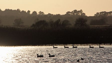 Seven swans a-swimming on Minsmere on a late December afternoon in 2015. Picture: David Lamming