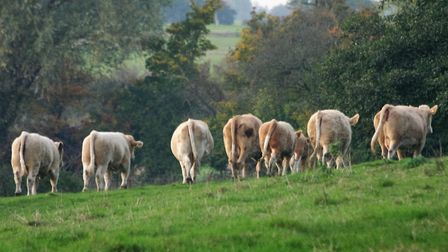 One presumes the eight maids a-milking started with eight cows... Picture: Julie Kemp