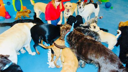 Canine Creche, Martlesham. The Canine Creche group dog care centres have been top rated in the new E