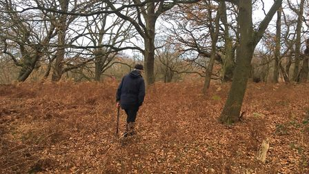 Andrew Phillips says his woods allow him to get lost in the wonders of nature
