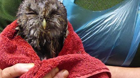Offers of help flooded in after Suffolk Owl Sanctuary appealed for towels to keep injured owls comfo