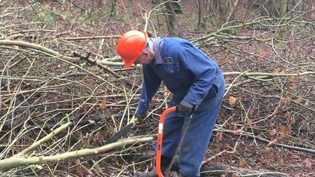 Coppicing encourages new growth, creates habitats for wildlife and enables wood to be harvested sust