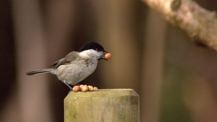iWitness challenge winner Robert Mckenna with his brilliant photograph of a March tit Picture: ROBE