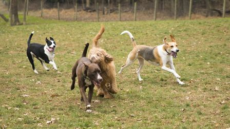 New research could improve outcomes for dogs with cancer Picture: GETTY IMAGES