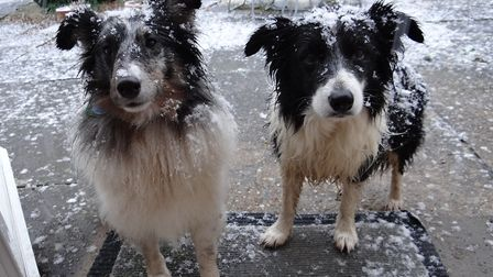 Dogs enjoying a previous snow flurry in Woolpit Picture: PAMELA BIDWELL/CITIZENSIDE.COM