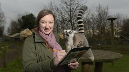 Animal record keeper Jade House from Africa Alive counting the lemurs. Picture: SARAH LUCY BROWN