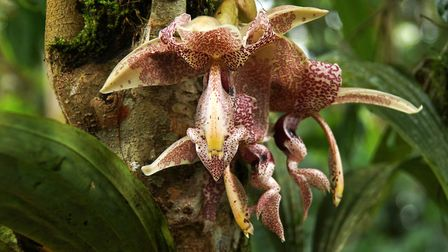 An orchid growing on a tree trunk. Picture: Thinkstock/PA.