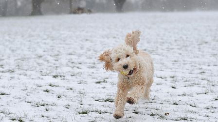 Dudley enjoying snow in Chantry Park last year Picture: SARAH LUCY BROWN