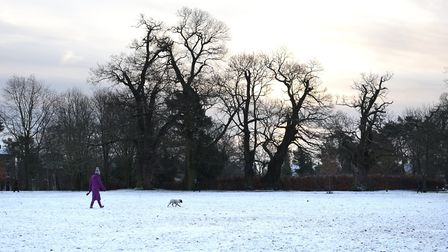 A dog walker in Christchurch Park Picture: SARAH LUCY BROWN