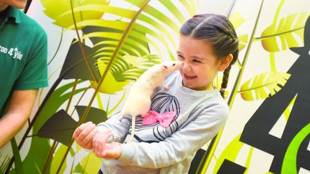 Children can get up close to fluffy, scaly or creepy crawly creatures at Ipswich Museum. Lauren Shar
