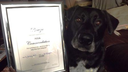 Bowza was very proud to receive his PDSA commendation Picture: DON COX