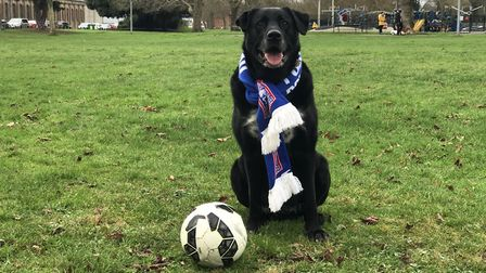 Bowza is set to make a special appearance at Portman Road for his lifesaving efforts Picture: VICTOR