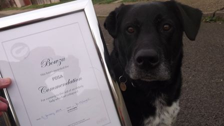 Bowza the heroic dog with his PDSA Commendation Picture: DON COX